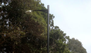 Austeknis street light LED Lambert Park Leichhardt Council